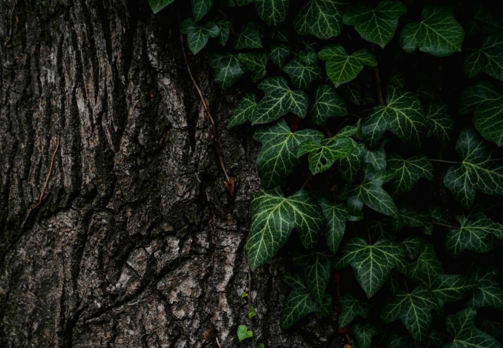 green leaves on tree trun k